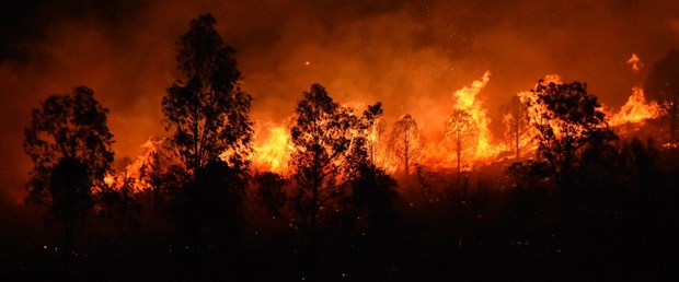 """ODTÜ kavaklığı """"yeşil"""" de Datça ve Muğla'da yakılan ormanlar yeşil değil mi?"""