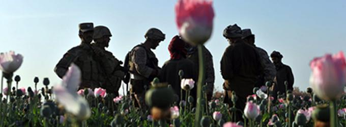 Dünyadaki afyonun % 98'i Afganistan'dan geliyor!